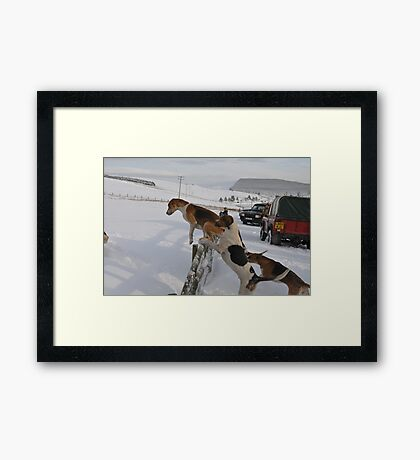Jumping the fence Framed Print