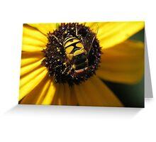 Hoverfly on Blackeyed Susan Macro Greeting Card