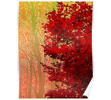 Red Maple in Autumn Poster