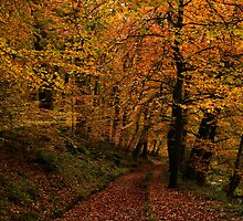 Autumn Collection - Woodland Walk 1 by Lorraine Parramore