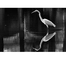 Harmony Crane Photographic Print
