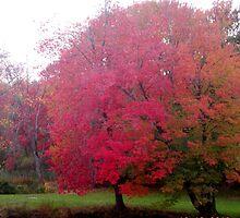Autumn Foliage on Loomis Campus by LisaO