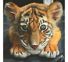 Tiger cub Photographic Print