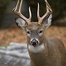 Big buck! by creativegenious
