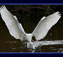 The Fishing Egret by snapdecisions
