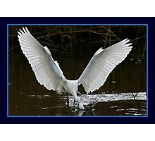 The Fishing Egret Photographic Print