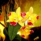 Yellow Orchids 5 by Janis Lee Colon