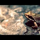 Summer in Greece - The Frog by RasmusKjeldmand