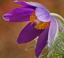 wind flower by dinghysailor1