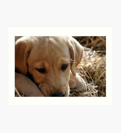 Puppy in Straw Art Print
