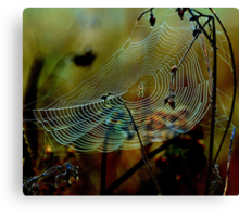 Web sight Canvas Print