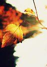 Autumn's warmth by Joshua Greiner