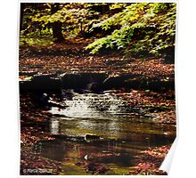 Sulpher Springs Falls Poster