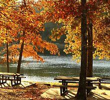 Golden Hour at the Park by Susan Blevins