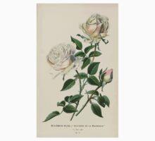 Favourite flowers of garden and greenhouse Edward Step 1896 1897 Volume 1 0240 Bourbon Rose or Suvenir de la Malmaison Kids Tee