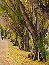Cambridge Terrace along the River Avon by Odille Esmonde-Morgan