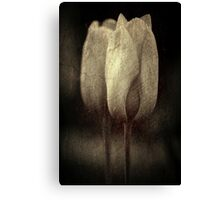 Vintage Tulips in Color Canvas Print