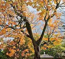 An Old And Splendid Tree - Autumn *featured by Jack McCabe