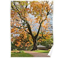An Old And Splendid Tree - Autumn *featured Poster