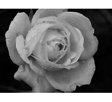 B&W Rose With Droplets Photographic Print