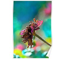 Just another wilted pink flower Poster