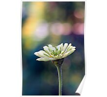 Just a white flower Poster