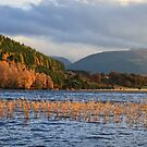 Autumn at Loch Pityoulish by Christopher Thomson