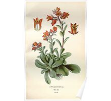 Favourite flowers of garden and greenhouse Edward Step 1896 1897 Volume 2 0061 Cotyledon Retusa Poster