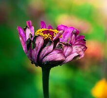 A pink flower overcome with emotion by alan shapiro