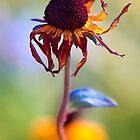 A Yellow flower doing the Samba by alan shapiro