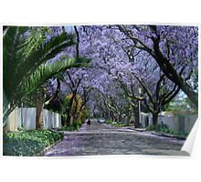 An avenue of jacarandas. Parkview, Johannesburg, South Africa Poster