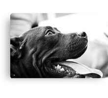 Pitbull Love Canvas Print