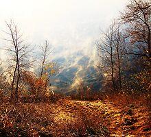 Fog Lifting by Pietrina Elena