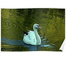 Gliding on a summer afternoon Poster
