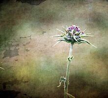 ~ Simply Thistle ~ by Lynda Heins