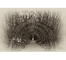 There Are Faeries at the Bottom of My Garden Photographic Print