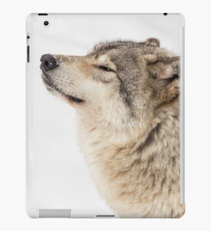 Timber wolf in winter iPad Case/Skin