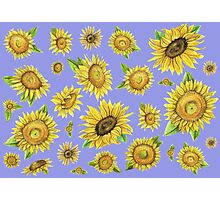Sunflowers Purple Photographic Print