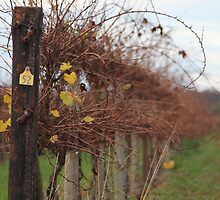 Winter vinyard 2 by Bluebelly