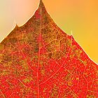 Leaf Detail by Nancy Barrett