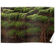 Terraced lushness Poster