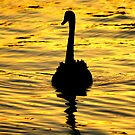 On golden pond... by Mary Trebilco