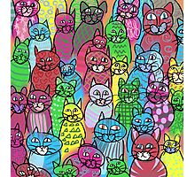 Colorful Cats  Photographic Print