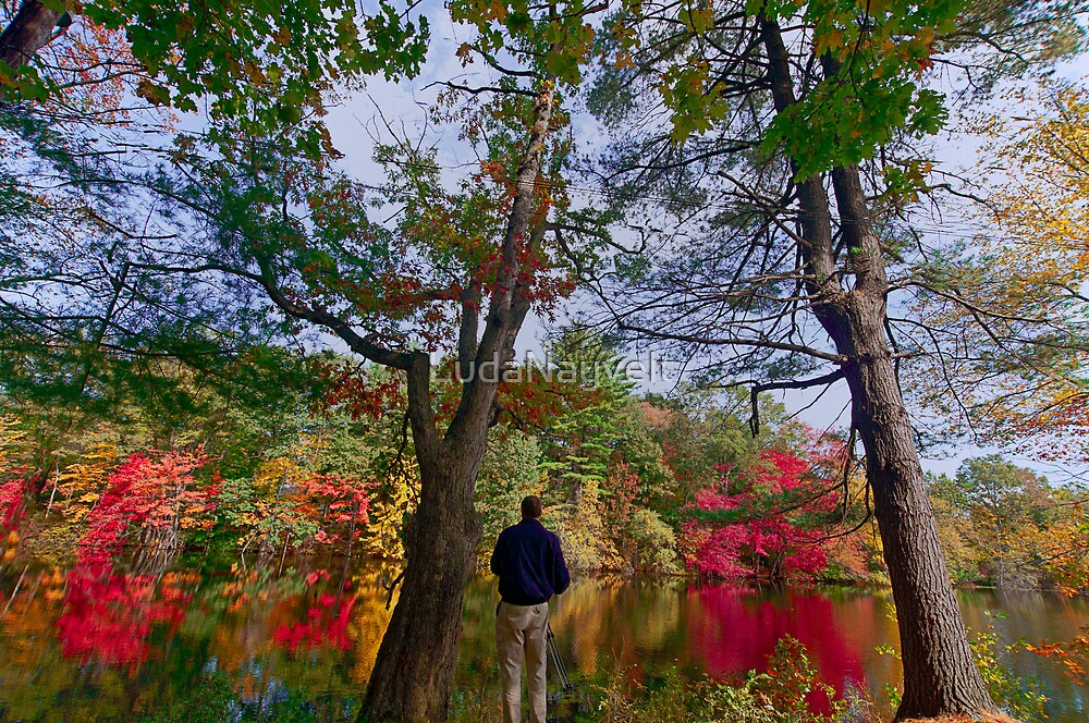 Colorfull fall in Dover, MA  by LudaNayvelt