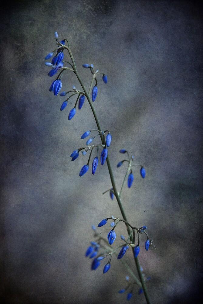 Moody.... by Carol Knudsen