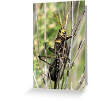 Horse Lubber Grasshopper Greeting Card