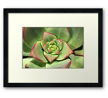 Hens And Chicks Succulent Framed Print