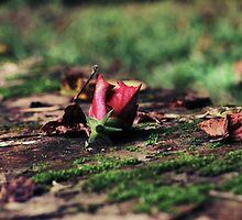 Beauty Never Dies by Maria Fernanda Gonzalez