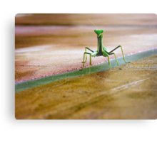 OK I'm not the famous gecko but I'm just as cute... Metal Print