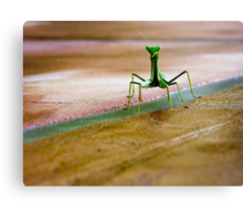 OK I'm not the famous gecko but I'm just as cute... Canvas Print
